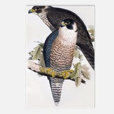 Unique Hawk drawing Postcards (Package of 8)