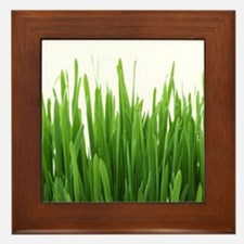 Fresh green grass on white backround- Framed Tile