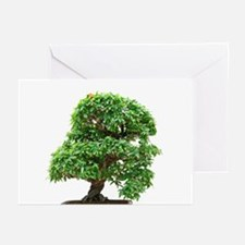 Punica Granatum bonsai Greeting Cards