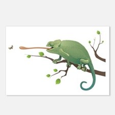 Chameleon catching insect Postcards (Package of 8)
