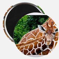 Giraffe Baby Magnets