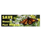 Plant milkweed Single