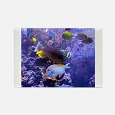 Big island hawaii magnets big island hawaii refrigerator for Best places to magnet fish