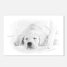 Lab Pup-Nap Postcards (Package of 8)