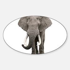 Realistic elephant design Decal