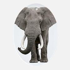 Realistic elephant design Oval Ornament