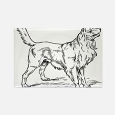 Collie dog hand drawing Magnets