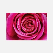 Hot Pink Rose Closeup Rectangle Magnet