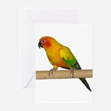 Sun Conure Greeting Cards (Pk of 20)