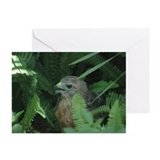 Unique Hawks Greeting Cards (Pk of 20)