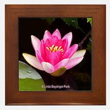 Pink Waterlily 04 Framed Tile