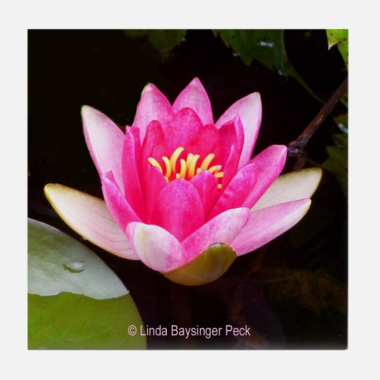 Pink Waterlily 04 Tile Coaster