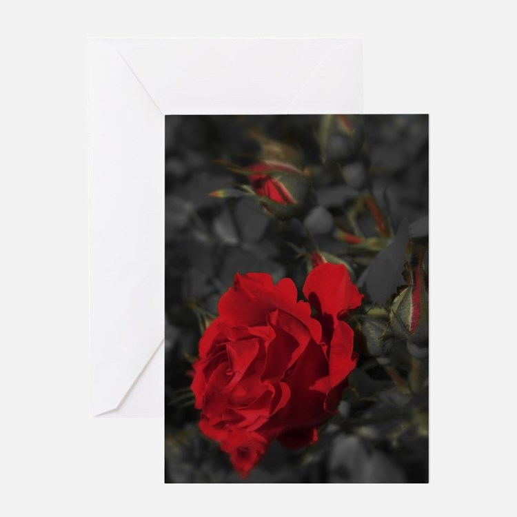 red rose in dark mourning death bac Greeting Cards