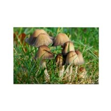 Mushrooms #1 Rectangle Magnet
