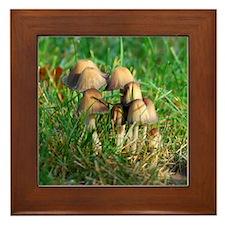 Mushrooms #1 Framed Tile