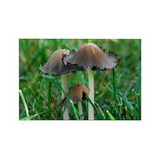 Mushrooms #2 Rectangle Magnet