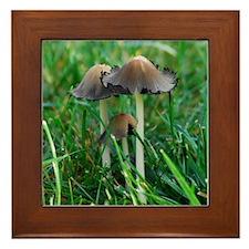 Mushrooms #2 Framed Tile
