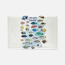 Aquarium Rectangle Magnet