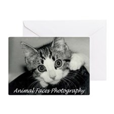 Adorable Kitten Greeting Cards (Pk of 10)