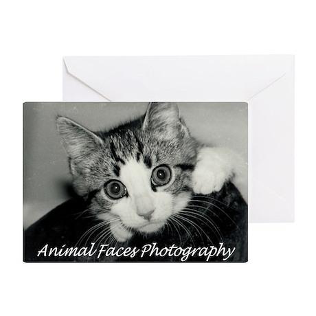 Adorable Kitten Greeting Cards (Pk of 10)