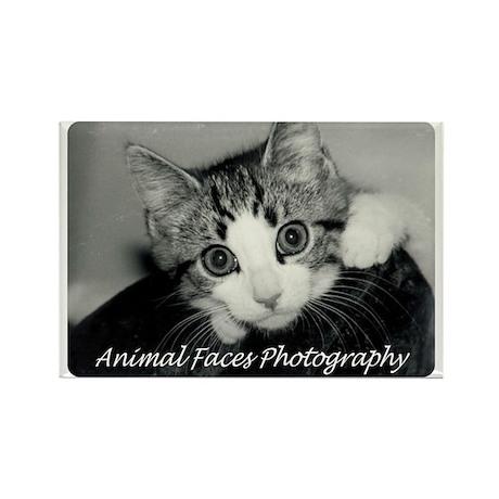 Adorable Kitten Rectangle Magnet
