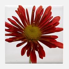 Fall Chrysanthemum Tile Coaster
