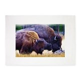 Bison 5x7 Rugs