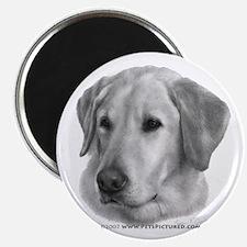 Sam, Labrador Retriever Magnet