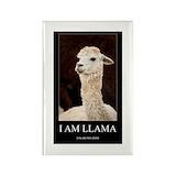 Llama 100 Pack