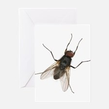 Realistic House Fly Greeting Cards