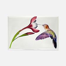 Hummingbird in flight Rectangle Magnet (100 pack)