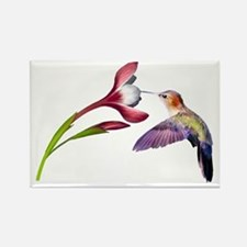 Hummingbird in flight Rectangle Magnet