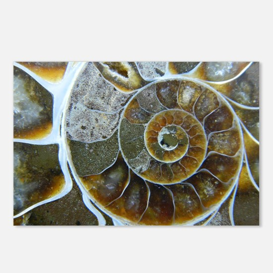 Unique Ammonite Postcards (Package of 8)