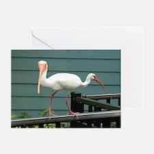 Both Ways Bird Greeting Cards (Pk of 20)