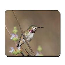 Calliope Hummingbird Mousepad