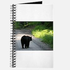 black bear walking on road Journal