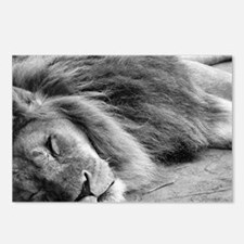 Cute White lion Postcards (Package of 8)