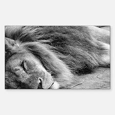 Cute Animal photos Sticker (Rectangle)