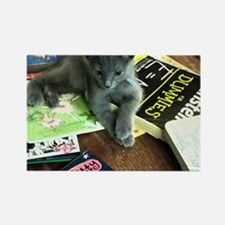 Cute Cats and books Rectangle Magnet