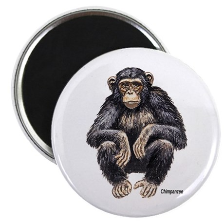 "Chimpanzee Monkey Ape 2.25"" Magnet (10 pack)"