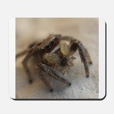 Jumping Spider Snacking Mousepad