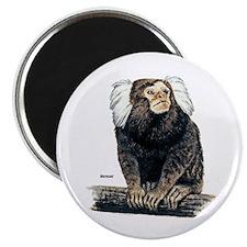 Marmoset Monkey Magnet