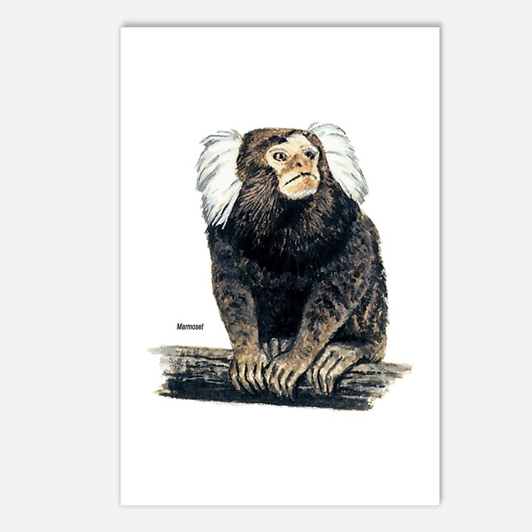 Marmoset Monkey Postcards (Package of 8)