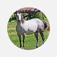 Horse in Avon Button