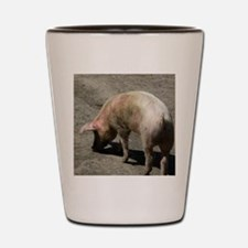 Lucky pig Shot Glass