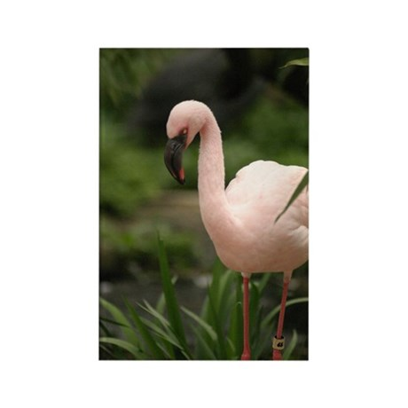 Flamingo 001 Rectangle Magnet