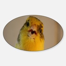 Singing Canary Decal
