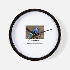 EXOTIC BIRDS - SCRUB JAY - Aphelocoma c Wall Clock