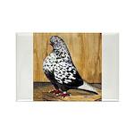 Black Teager Flight Rectangle Magnet (100 pack)