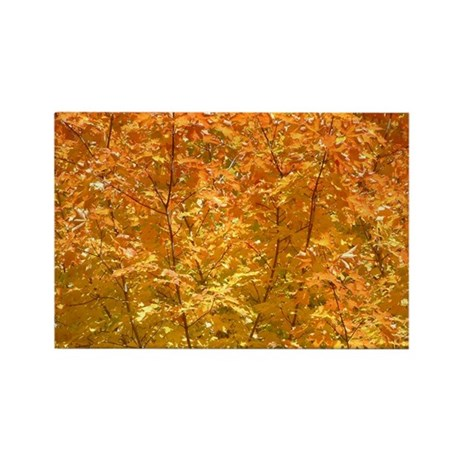 Fall Leaves Rectangle Magnet
